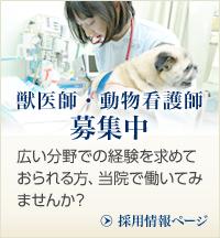 獣医師・動物看護師募集中 広い分野での経験を求めておられる方、当院で働いてみませんか? 採用情報ページ